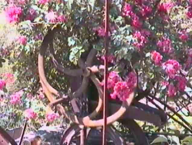 ........Près du Rance demeurent des jardins fleuris........